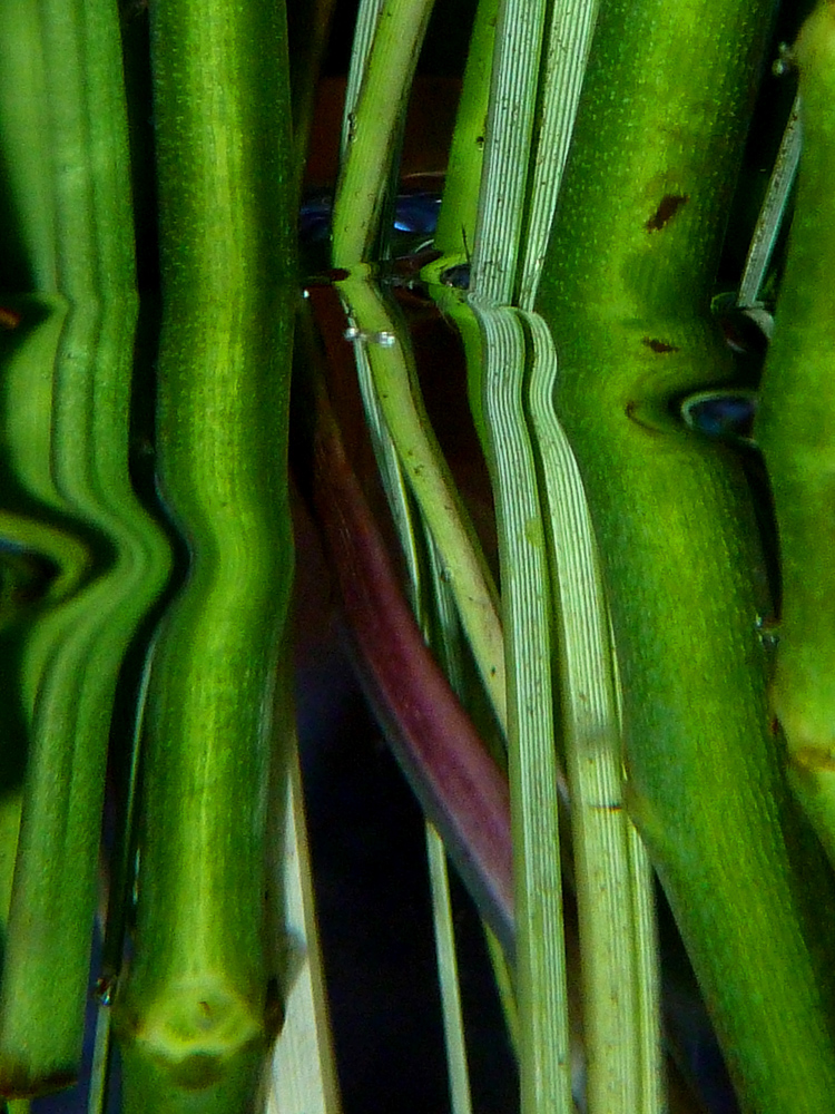 Spiegelung organische Formen 4