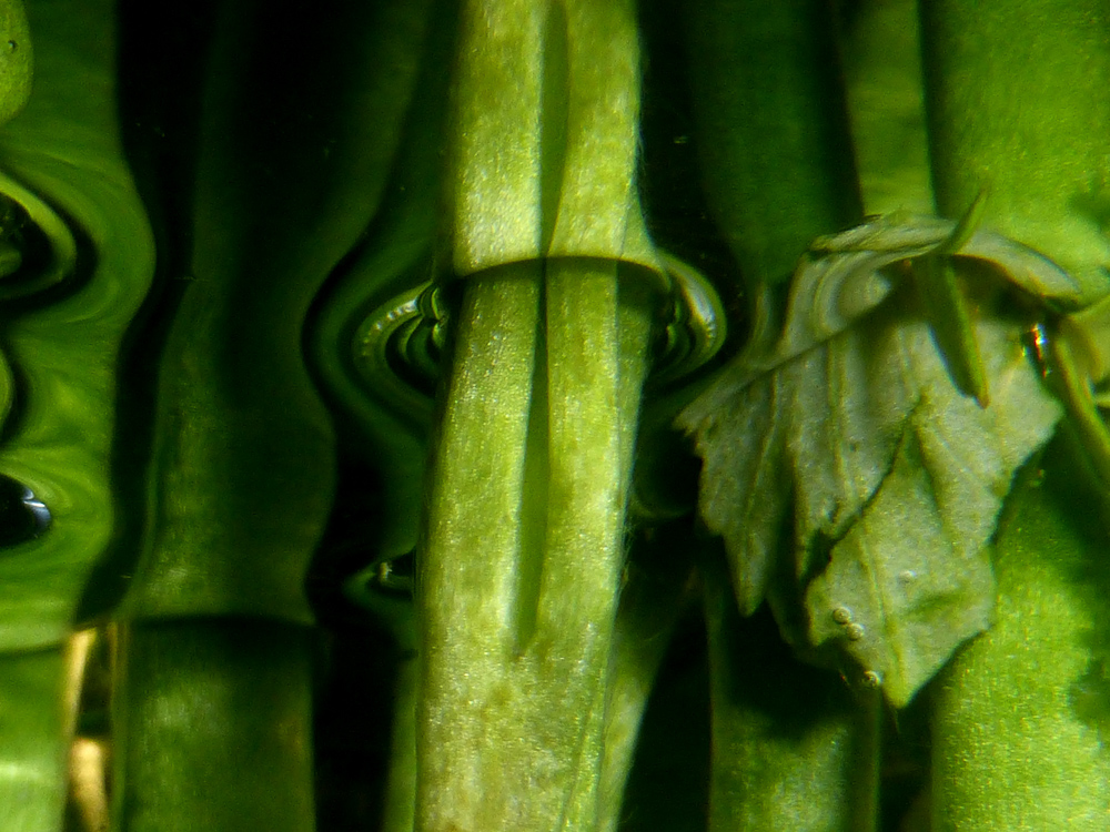 Spiegelung organische Formen 2
