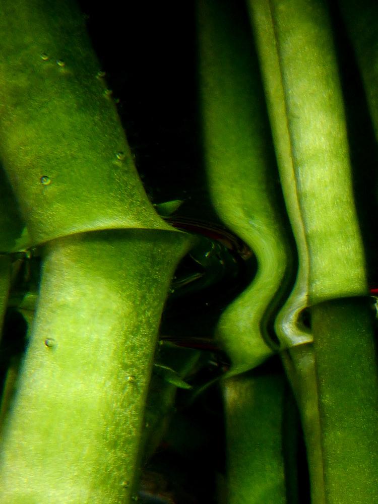 Spiegelung organische Formen 5